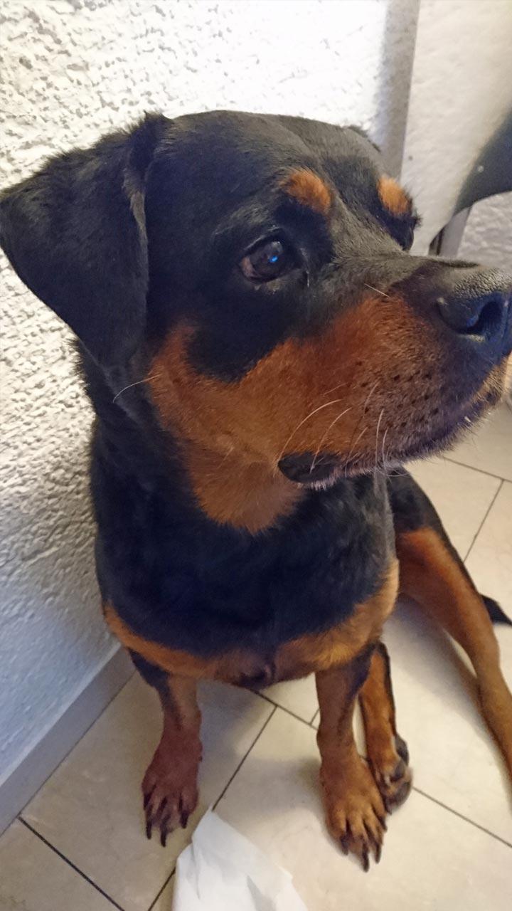 ein Hund erzählt aus seinem Leben